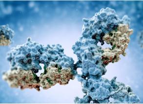 DNA Modification Antibodies