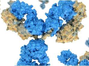 Other Antibodies