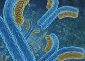 Chromatin Remodeling Antibodies