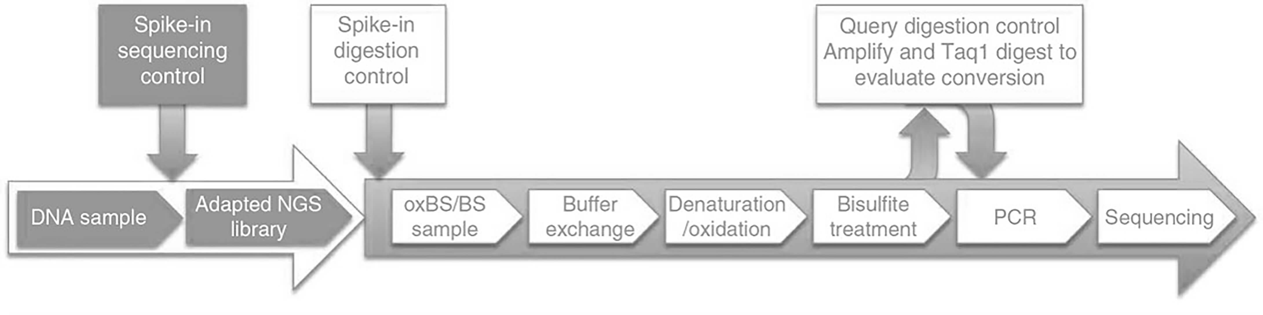Workflow of oxidative bisulfite sequencing (oxBS-Seq) at Creative BioMart