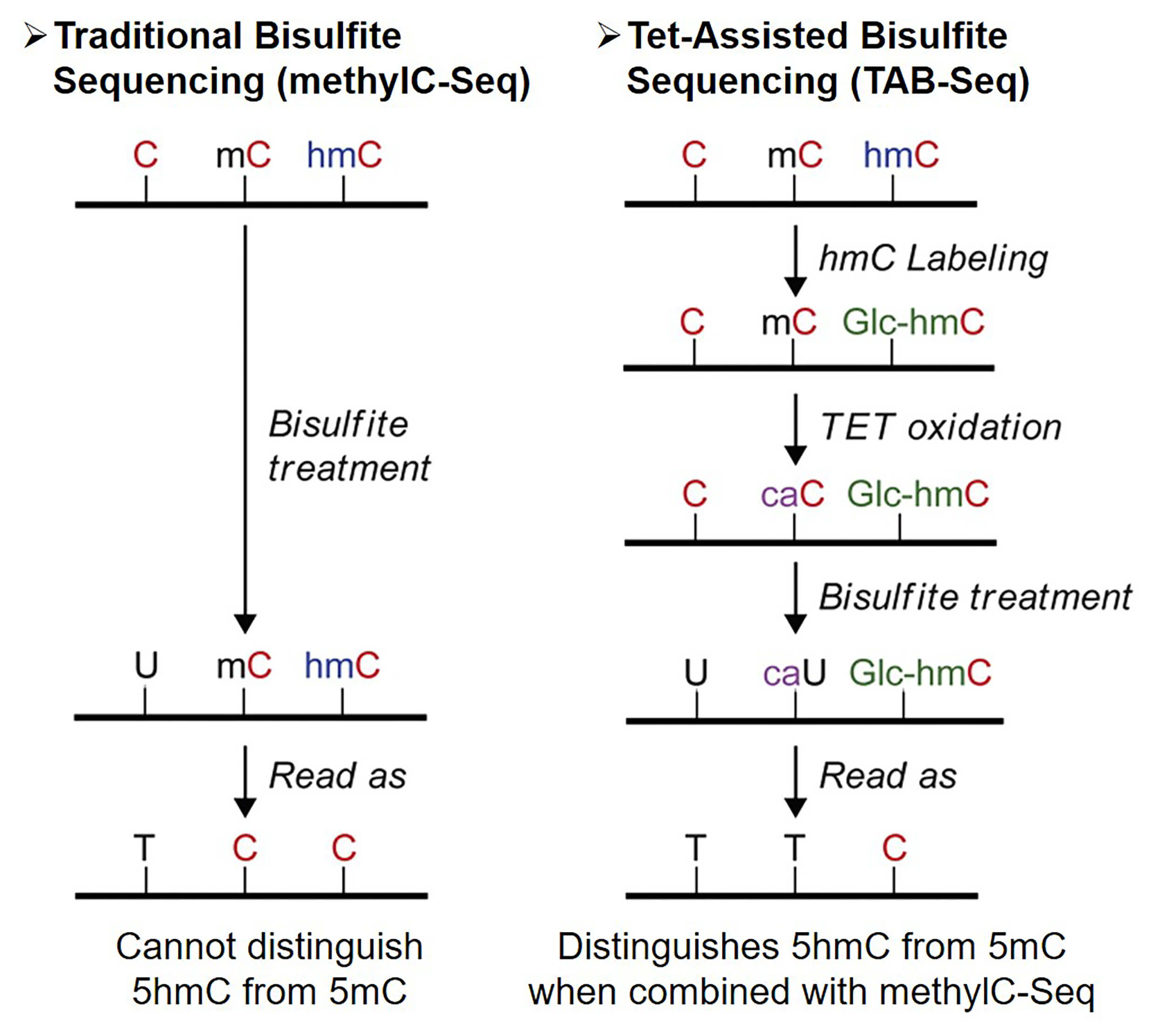 Overview of Tet-assisted bisulfite sequencing (TAB-Seq)