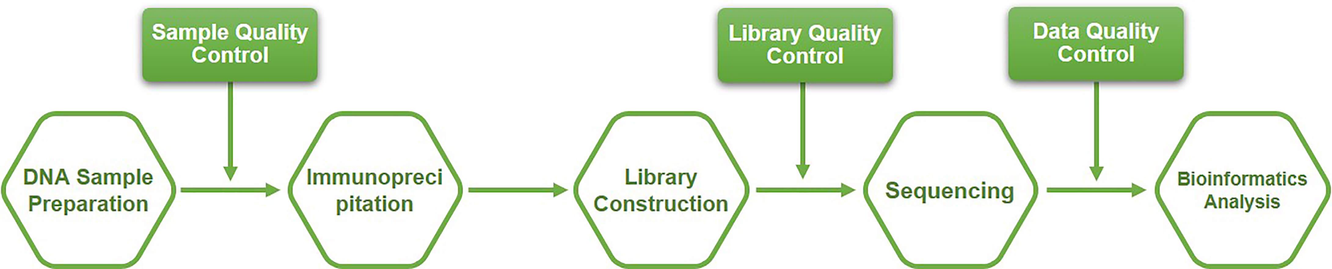 Workflow of hMeDIP-Seq at Creative BioMart