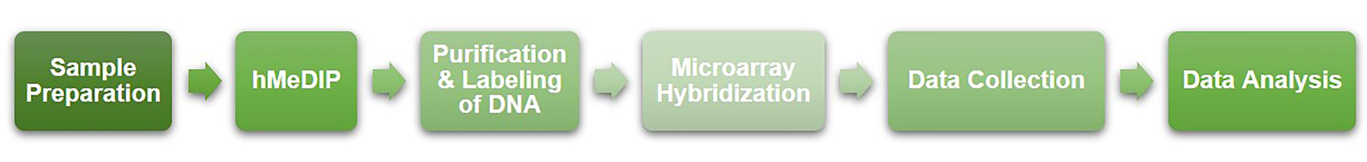 Workflow of hMeDIP-chip service at Creative BioMart