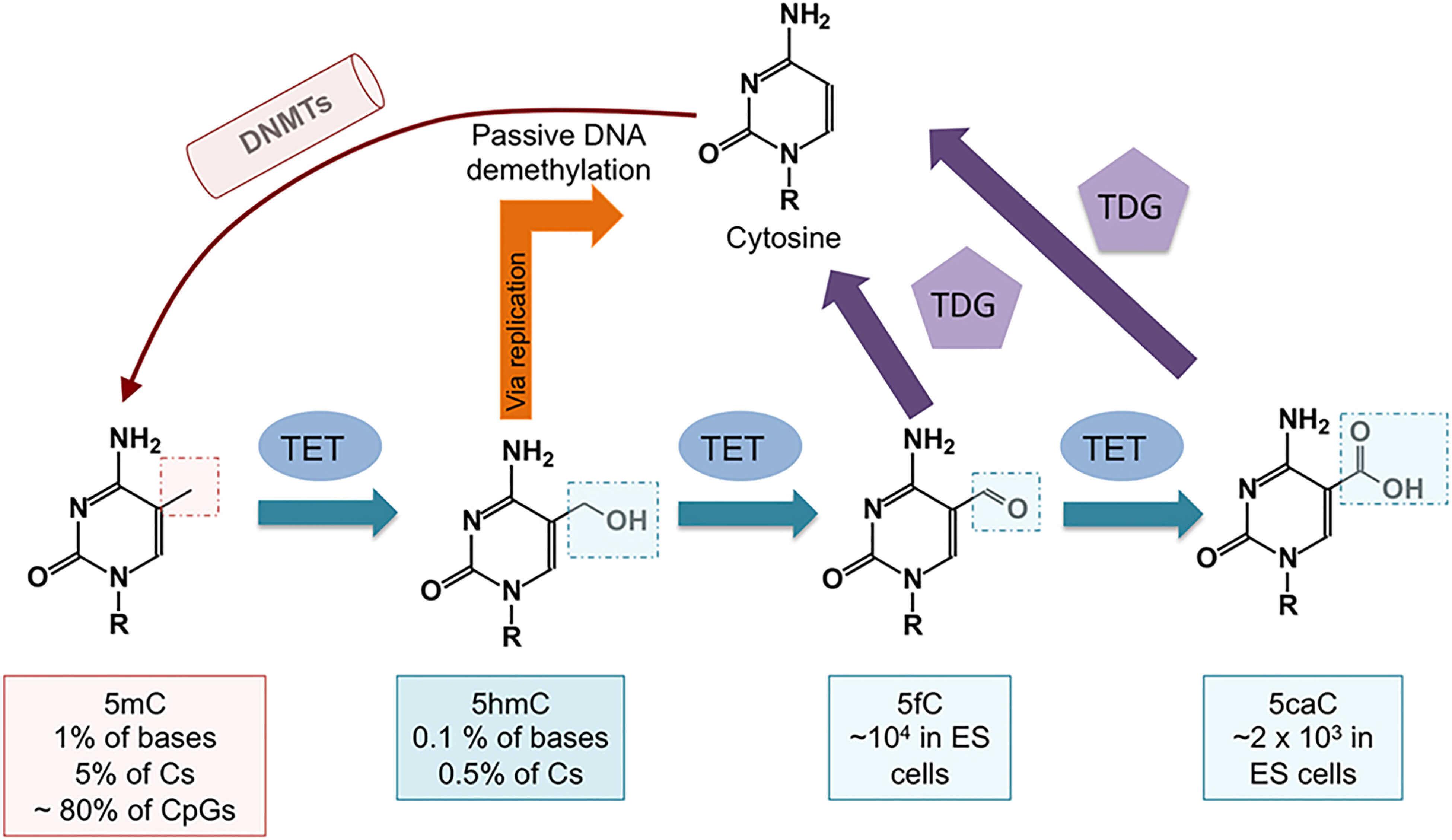 Schematic diagram of DNA methylation variants