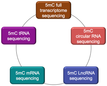 Categories of 5mC RNA Sequencing