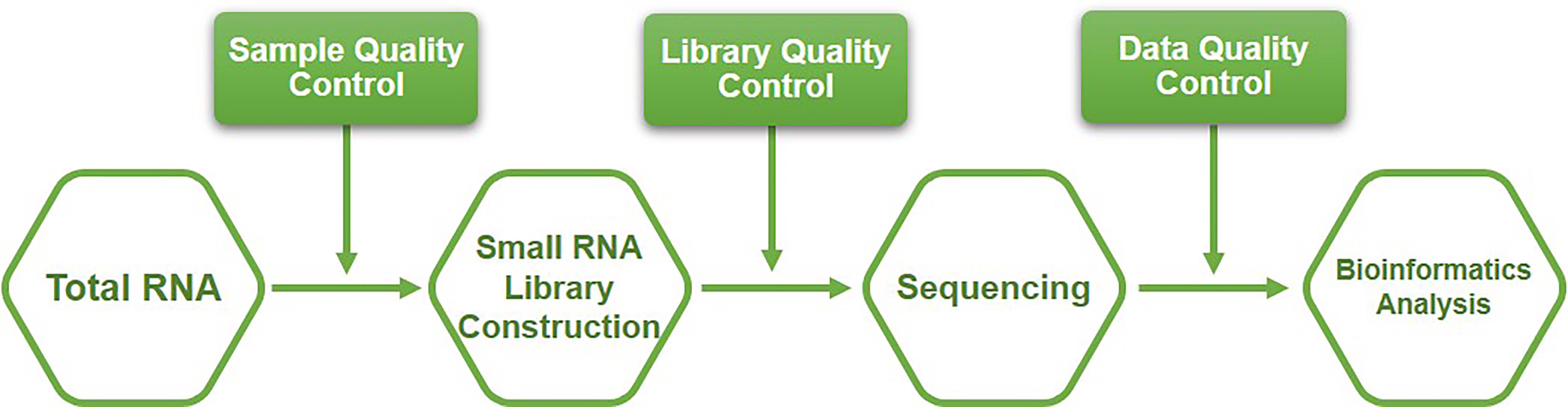 Workflow of small non-coding RNA sequencing service at Creative BioMart