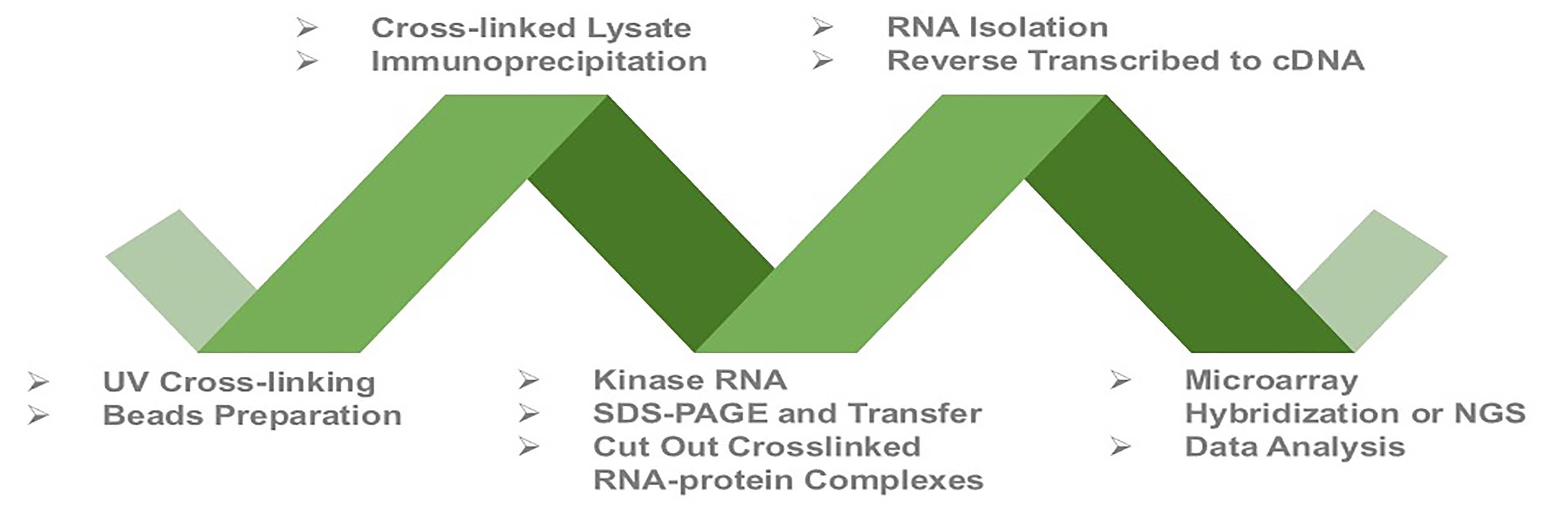 Categories of Crosslinking-immunoprecipitation (CLIP)
