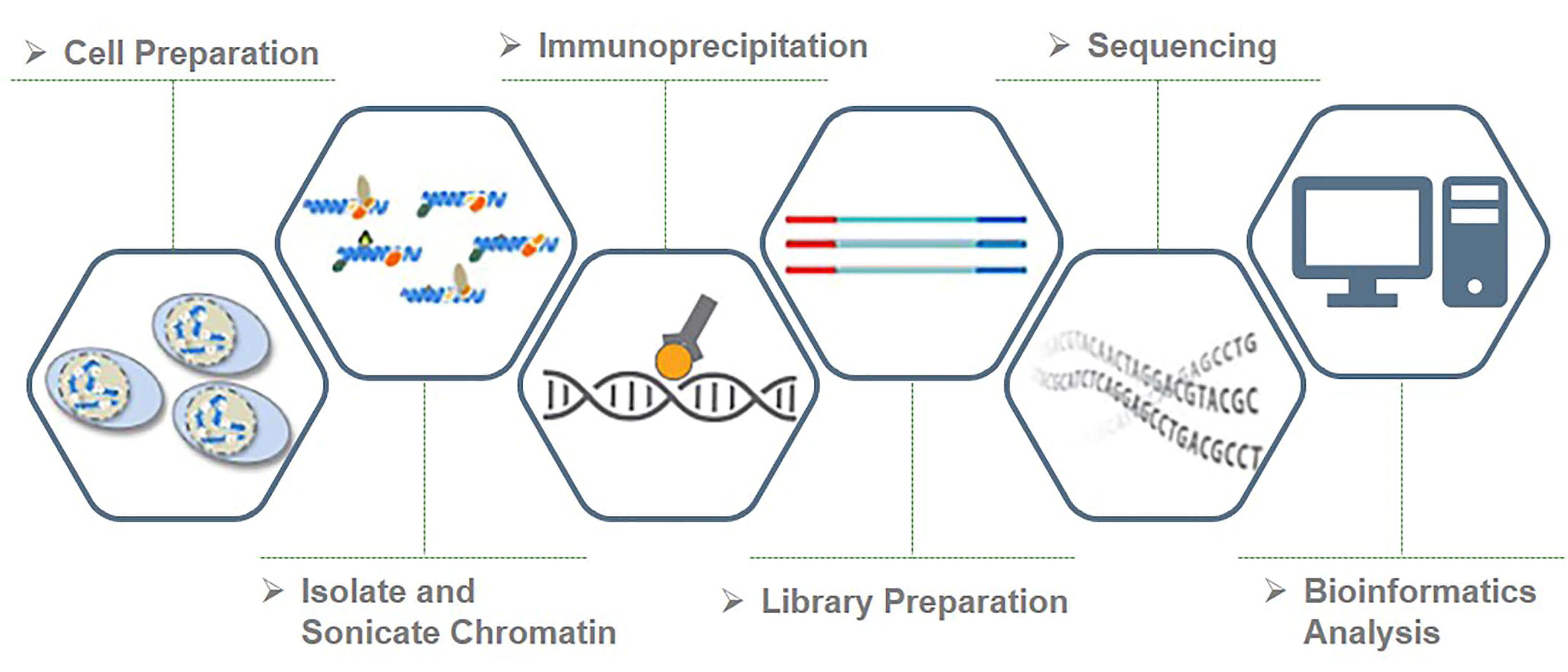Workflow of histone ChIP-Seq service at Creative BioMart