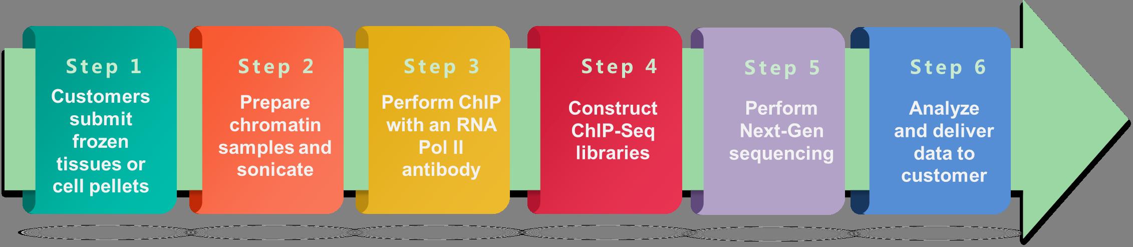 Schematic workflow of Pol II ChIP-Seq service