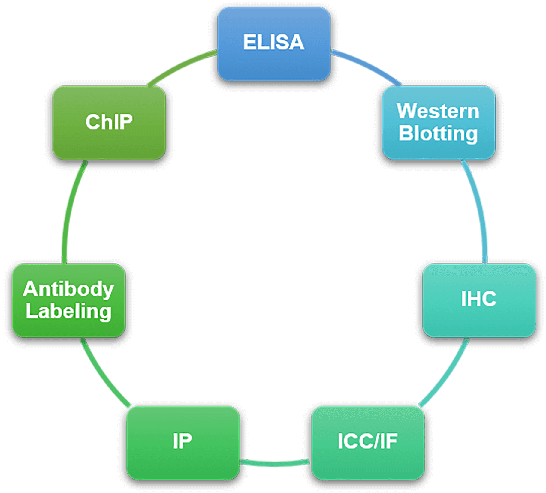 Service Categories of ChIP Antibody Validation