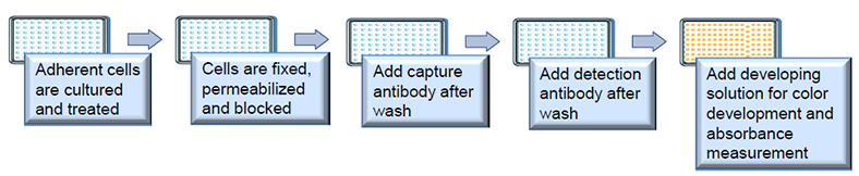 Workflow of Methylated Histone Quantification (MHQ) Assay