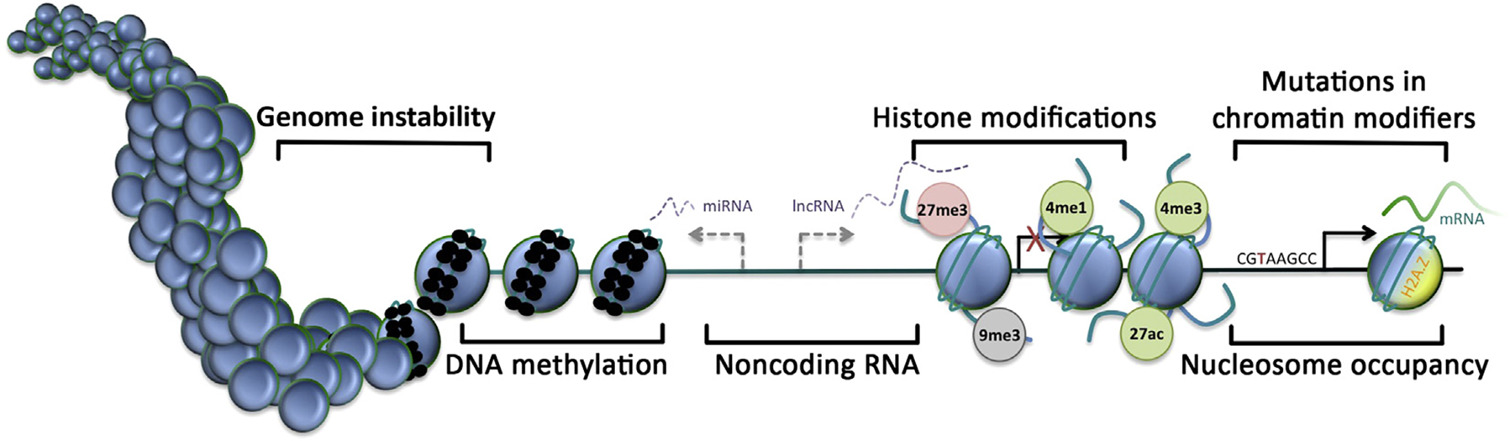 Epigenetic hallmarks of the cancer genome. Nucleosome, blue circle; DNA methylation, small black circle; transcriptional start site, arrow; inactive transcriptional start site, red cross; H3K27 trimethylation, 27me3 (red, repressed); H3K9 trimethylation, 9me3 (gray, silenced); H3K4 monomethylation, 4me1 (green, active); H3K4 trimethylation, 4me3 (green, active); H3K27 acetylation, 27ac (green, active).