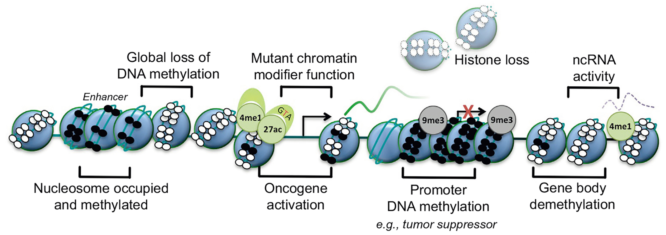 Basic epigenetic mechanisms in cancer. Nucleosome, blue circle; DNA methylation, small black circle; unmethylated DNA, small white circle; transcriptional start site, arrow; inactive transcriptional start site, red cross; H3K9 trimethylation, 9me3 (gray, silenced); H3K4 monomethylation, 4me1 (green, active); H3K27 acetylation, 27ac (green, active).