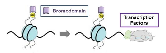 Bromodomain regulates transcription
