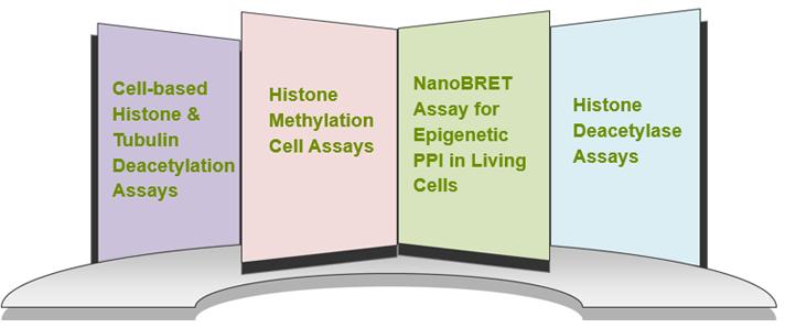Cell-based Epigenetic Assays