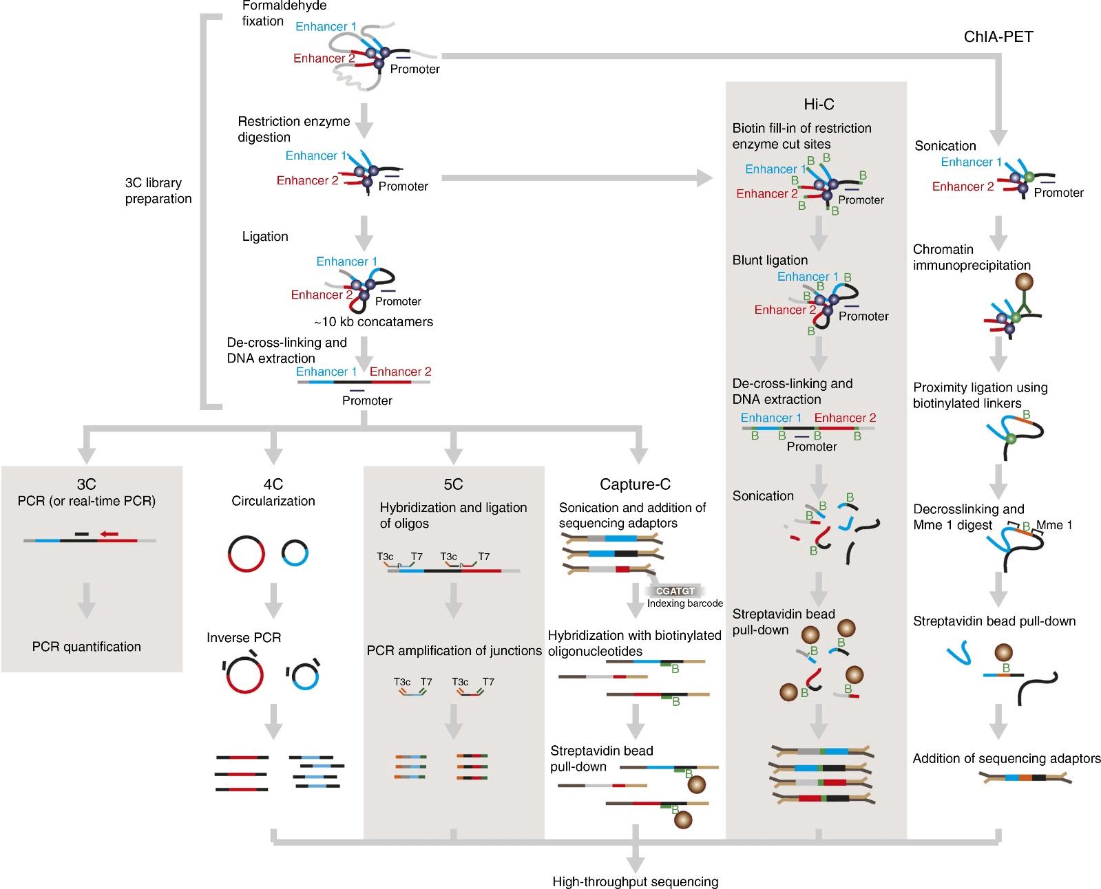 Comparison of Different 3C-based Methodologies.