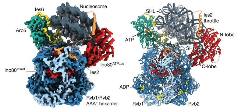 Examples of CRC structures determined by cryo-EM.