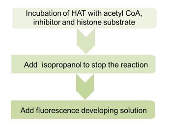 Schematic procedure of fluorometrical method for HAT screening assay