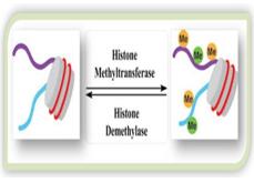 Methyltransferase Screening