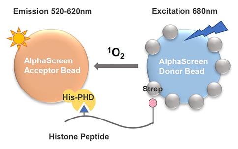 Schematic Diagram of AlphaScreen Assay