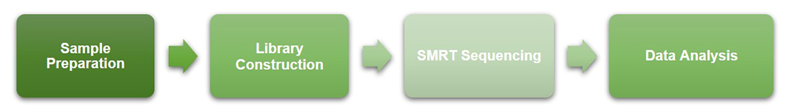 Workflow of SMRT Sequencing at Creative BioMart