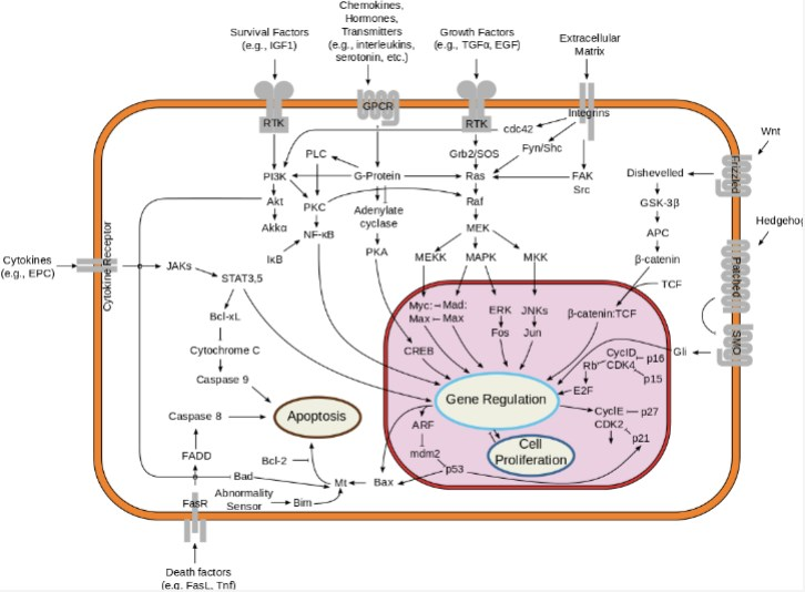 Overview of signal transduction pathways involved in apoptosis.