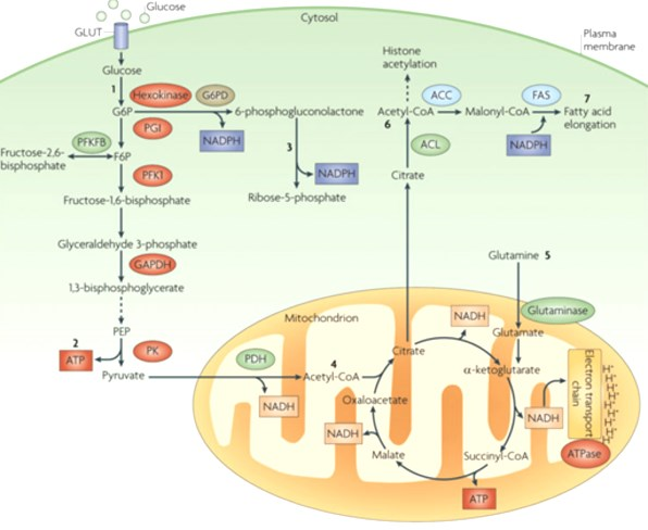 Kegg pathway diagram of energy metabolites.
