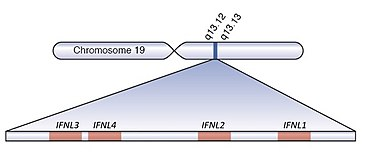 Interferons Proteins