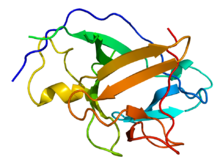 Interleukins Proteins