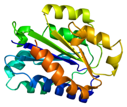 Alpha Integrin Proteins