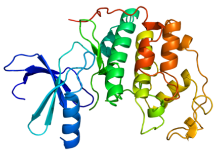 Structure of the CDK2 protein.