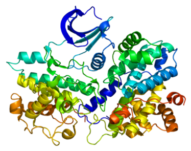 Protein structure of Cyclin E1.