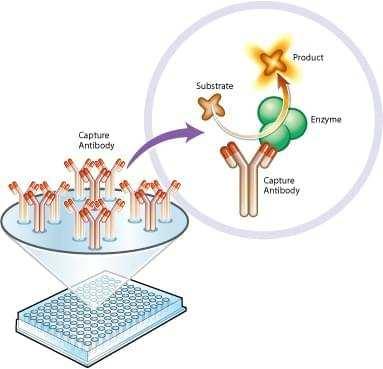 Enzyme Activity Assay Creative Biomart