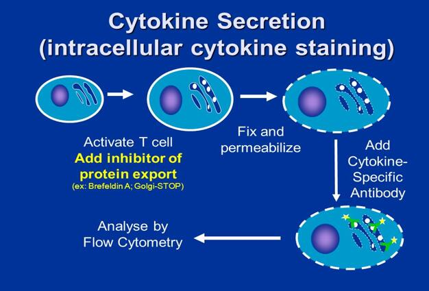Intracellular Cytokine Detection and Activity Assay