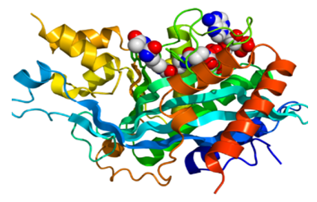 Crystallographic structure of p300/CBP transcription co-activatorsm.