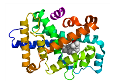 Crystallographic structure of the ligand binding domain.