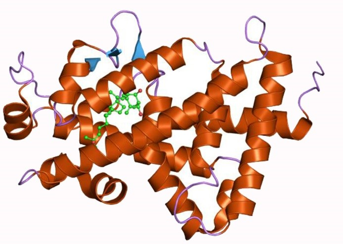 Structure of vitamin D receptor (VDR), protein was shown as ribbon.