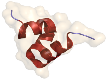 Crystal structure of porcine osteocalcin.