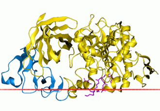 Protein structure of Pancreatic amylase.
