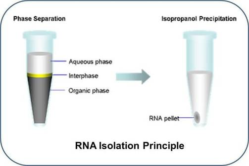 fig the schematic diagram of rna isolation principle