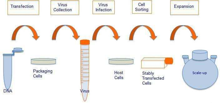 Stable Cell Line Services