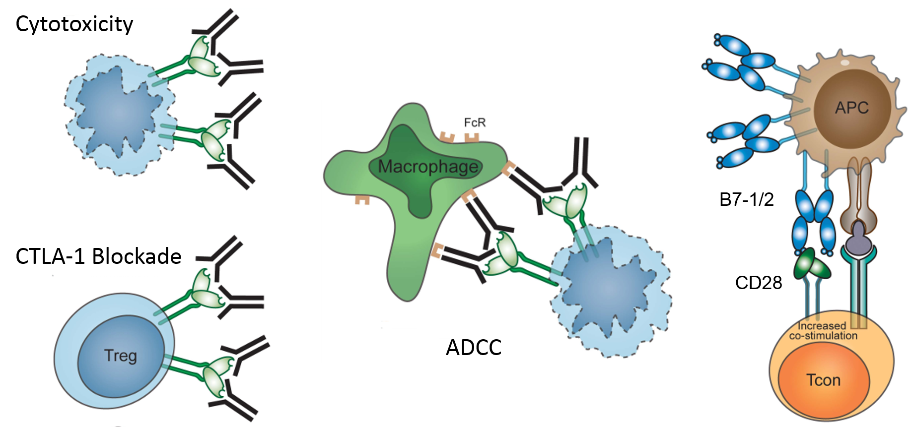 Immune Checkpoint Proteins - Creative BioMart