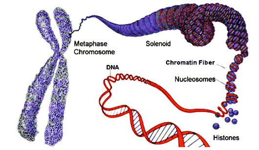 Chromosome Structure Proteins