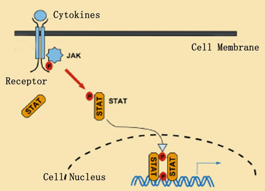 Enhancement of cytokine receptor function