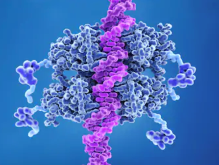p53 bound to DNA p53 prevents cancer formation and acts as a guardian of the genome. Mutations in the p53 gene contribute to about half of the cases of human cancer.