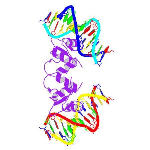 Recombinant Human ELK1, His-tagged, Myc-tagged ELK1-31H