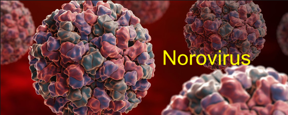 Virus-specific Antibody—New Clue to against Norovirus Infection